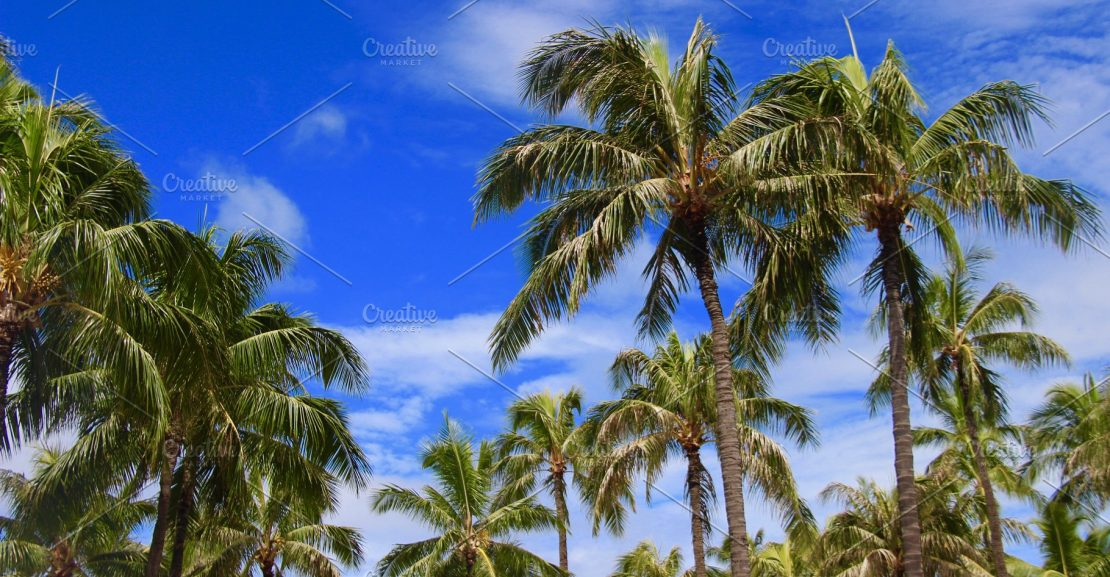 hawaii palm trees  1110x577 - What kind of fertilizer you should choose for your palm tree?