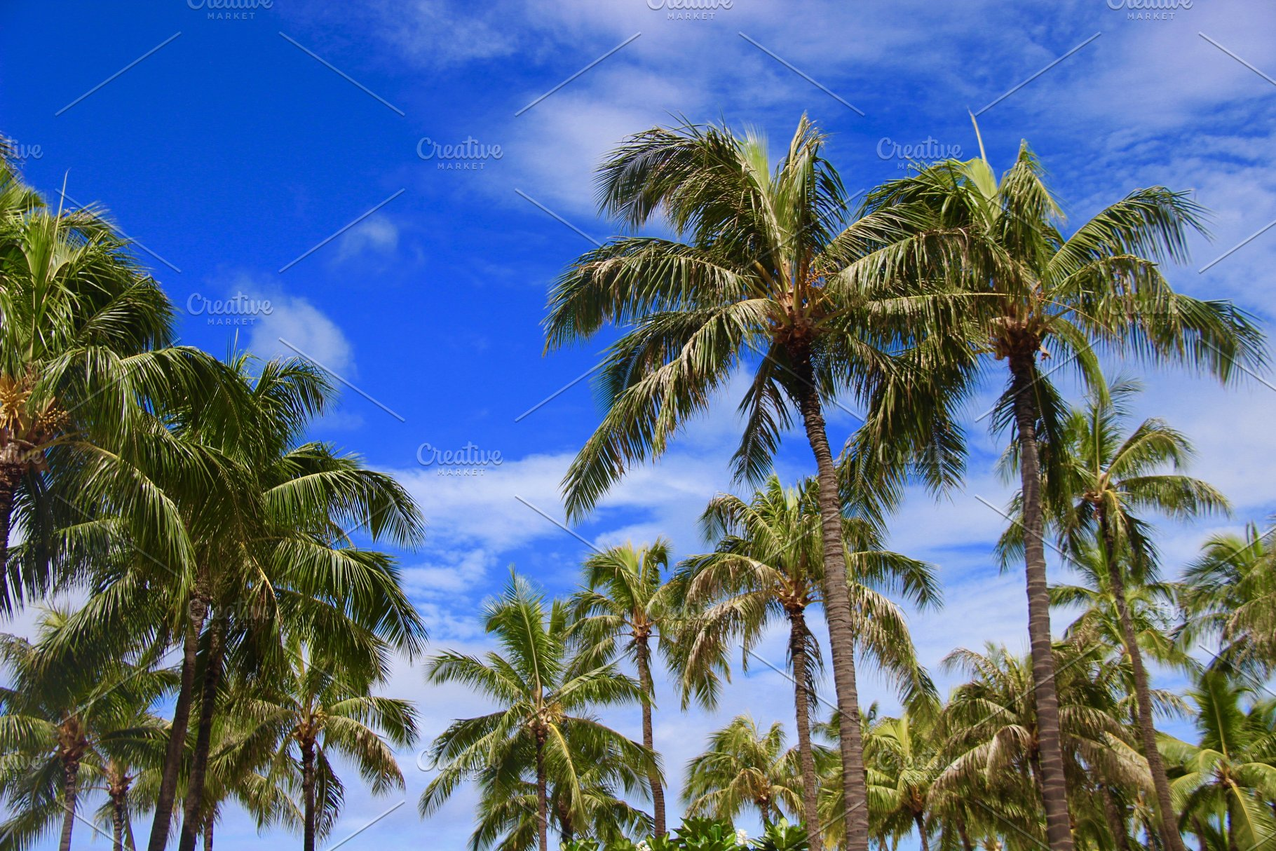 hawaii palm trees  - What kind of fertilizer you should choose for your palm tree?